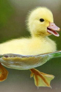 Really cool shot of a duckling!