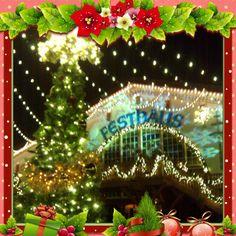 Christmas Town at Busch Gardens Williamsburg, VA ❤