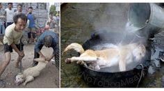 LET'S STOP THIS!!Preparations are in full swing for the Chinese dog meat festival.Sign the petition, save the dogs