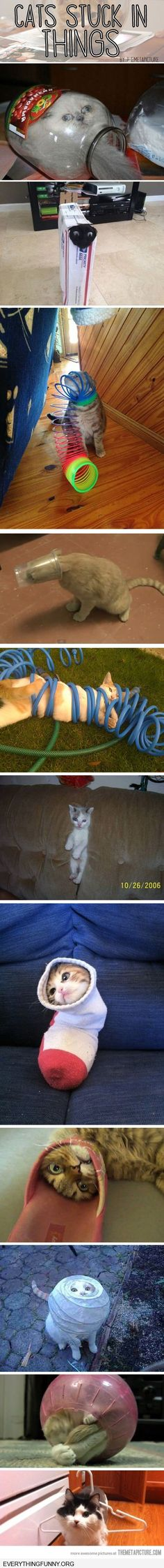 funny cats stuck in things