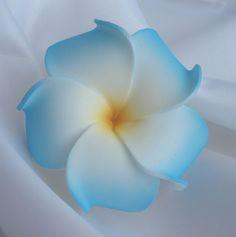 6cm blue and white frangipani.JPG (800×804)