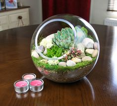 Large Landscaped Glass Globe Succulent Terrarium Kit with preserved moss and pebble decoration Terrarium Kits, Large Terrarium, Succulent Terrarium, Glass Globe, Succulents, Landscape, Food, Art, Art Background