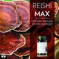 ReishiMax Glp® is a standardized Reishi mushroom extract that incorporates cracked spores, a proprietary technology that releases Reishi's active ingredients, providing unique immune system activity not found in other Reishi products. How To Boost Your Immune System, Cancer Sign, Active Ingredient, Anti Aging Skin Care, Health And Nutrition, Breast Cancer, Nu Skin, Mushroom, Skin Products