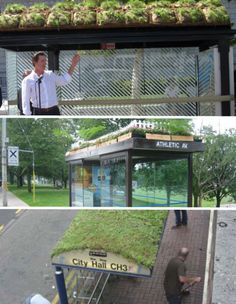Living Bus Shelters - bus shelter serves double function, must be heck to mow :)