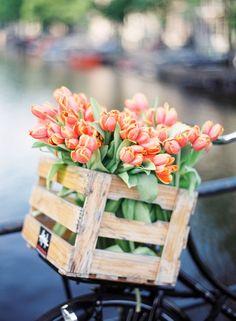 Tulipes+...+...r%c3%a9%c3%a9pingl%c3%a9+par+Maurie+Daboux+%e2%9c%ba%e2%9d%83%e2%9c%bf+%e1%83%a6