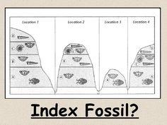 Index Fossils Activity Index Fossils Activity