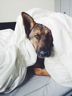 Everyone has lazy mornings.