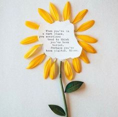 Bloom. Sunflower quote diy in a canvas or frame