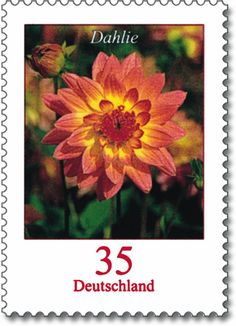 Serieblumen michel2505 dahlie.jpg