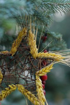 Natural Christmas. The wheat, so cute!
