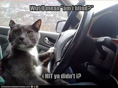 I Can Has Cheezburger? - Page 4 - Lolcats n Funny Pictures - funny pictures - Cheezburger