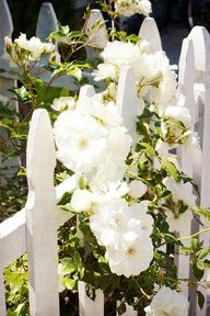 White Picket Fence  by Abby Lanes    6 repins  simply-flowers.blogspot.com