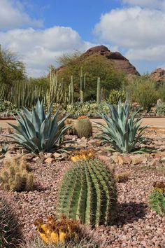desert botanical gardens | desert botanical garden in phoenix aaa gem rated phoenix attraction