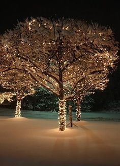 examples of natural christmas tree decorations | Backyard garden decor for Christmas | Home Garden Landscape
