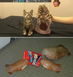SCARIEST Giant Bugs - I feel the same way about Doritos