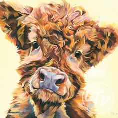 Contemporary cow art for the home. Lauren Terry specialises in fun pictures of all breeds of cattle. From Highland Bulls, to friesian Calfs, you will find the cow artwork just for you. Highland Cow Painting, Highland Cow Art, Highland Cow Pictures, Highland Calf, Scottish Cow, Cow Wallpaper, Cow Drawing, Fluffy Cows, Baby Cows