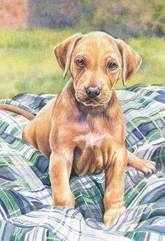 Puppy Rhodesian Ridgeback Original Framed by GailDolphinArt