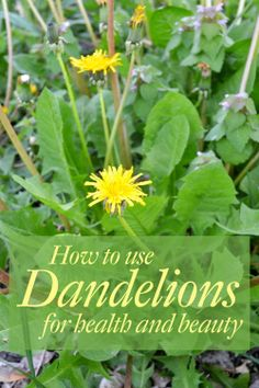 How to use Dandelions for natural health and beauty - cleanse your liver and digestive system, balance hormones, get your anti-aging vitamins, and hydrate your skin.  All with one persistent and perky herb. http://iriefromthetub.blogspot.com/2014/06/how-dandelions-benefit-your-health-and.html
