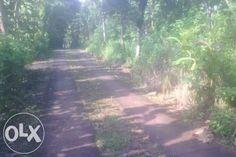 Tanah full POHON JATI