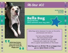 Meet Bella Bug, CRCG Club FETCH All Star! Bella fetches more out of life by giving her mom the doggy eyes.