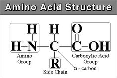Amino acids are important organic compounds that are essentially the building blocks of proteins. #aminoacid