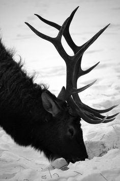 the only way I like antlers... attached to the beautiful animal & alive!