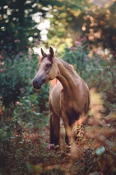 ** There ARE horses in heaven. / God takes care of all his creatures! Amen! (: