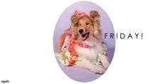 #Fridays as fabulous as dogs in flowers! https://twitter.com/_OPSH #quotes #inspiration #fun #dogs #flowers