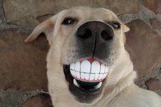 My friend's dog has a ball from their dentist - Imgur