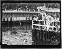 Beste afbeeldingen van badhuizen en zwembaden amsterdam in