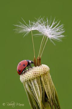 Ladybird by Roberto Marini on 500px