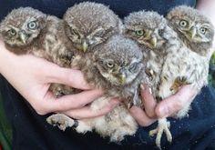 Owl Storytelling: Un nido artificiale per la civetta con un design b...