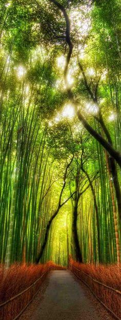 The Arashiyama Bamboo Grove in Kyoto, Japan • photo: Trey Ratcliff on stuckincustoms