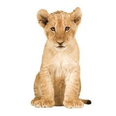KEK Amsterdam Safari Friends Lion Cub XL muursticker   FLINDERS verzendt gratis