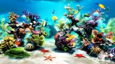 Its stunning, photo-realistic graphics recreate the beauty of 3D fish swimming freely in a 3D environment, including a reef, with live clams and swaying sea life. Description from imfreeware.com. I searched for this on bing.com/images