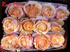 Making the difference since 1997: Import Top Quality Flowers from Ecuador with us! rose.elite.international@gmail.com