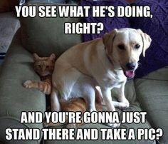 Ha! Sorry cat....