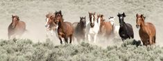 mustangs pferde | ... OF THE HEARTLESS VANDALS WHO COMMITTED AN ATROCITY AT MUSTANG MONUMENT