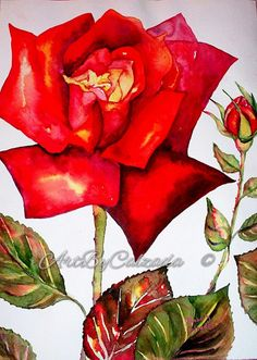 Hey, I found this really awesome Etsy listing at https://www.etsy.com/listing/492480843/red-rose