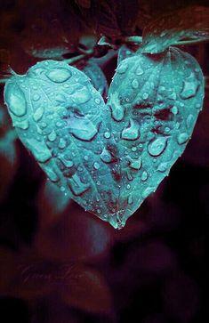 Non essere in collera con la pioggia; semplicemente non sa come cadere verso l'alto. Vladimir Nabokov