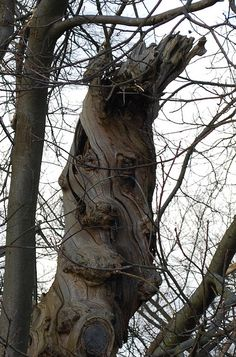 Benevolent tree face by Spannarama, via Flickr