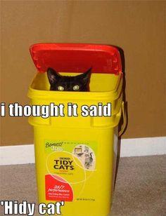 Misunderstood cat!
