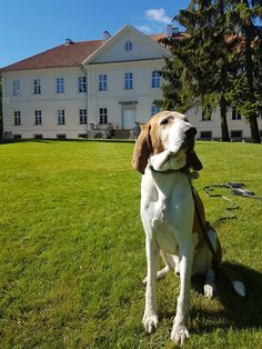 Noble Swiss Runner in front of the Palace Palace, Dogs, Animals, Animales, Animaux, Doggies, Animal, Animais, Palaces