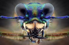 Macrofotografia revela animais em close up extremo