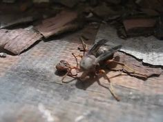 Decapitated wasp grabs its head before flying awayhttps://i.imgur.com/nKSPzkU.gifv
