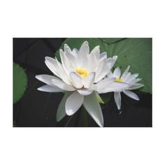 #Water lily canvas print - #flower gifts floral flowers diy