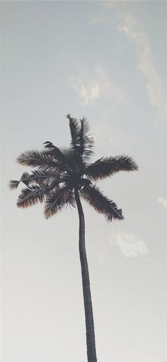 tree iPhone X Wallpapers