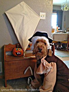 goldendoodle halloween costumes