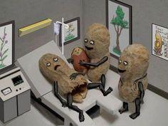 Peanut giving birth.