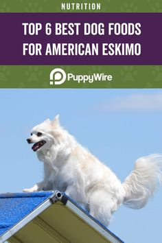 Find the best dog food for American Eskimos right here. This article covers the top 6 picks ranging from puppies, adults, seniors, and much more. Miniature American Eskimo, American Eskimo Puppy, Best Dog Food, Dry Dog Food, Best Dogs, Dog Ages, Nutrition Guide, Small Breed, Dog Food Recipes